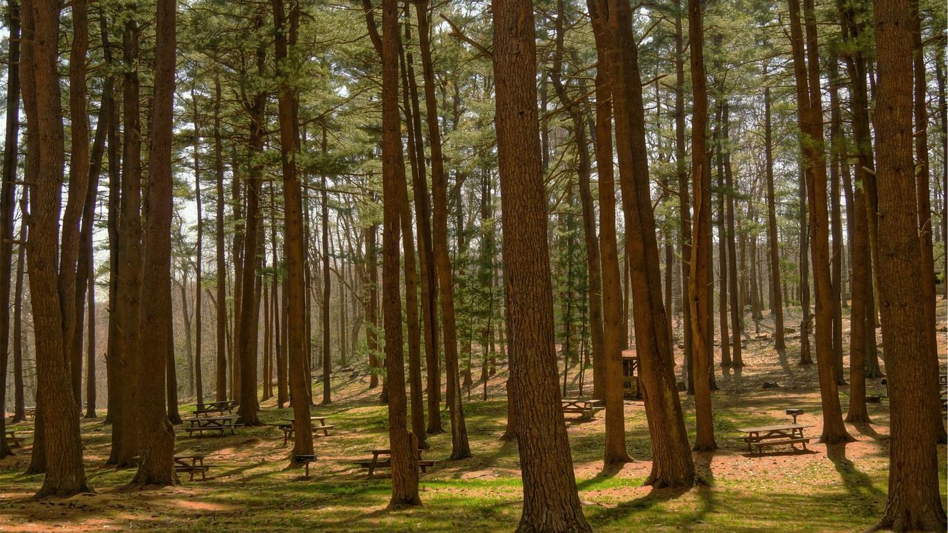 Lomoca forest 1 30c26e10 3xba